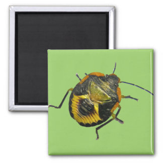 Green Stink Bug Nymph Coordinating Items Fridge Magnet