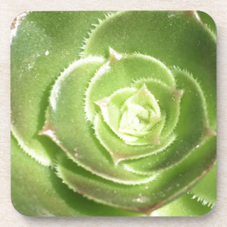 Green succulent coaster
