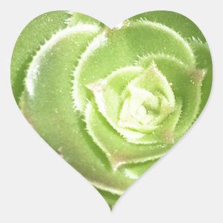 Green succulent heart sticker