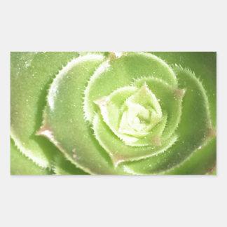Green succulent rectangular sticker