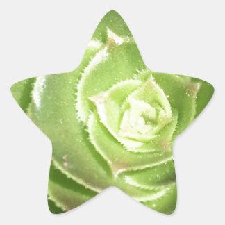 Green succulent star sticker