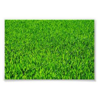 Green Summer Grass Texture Photo Print