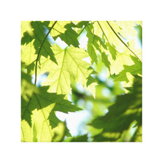 Green Summer Maple Leaves Canvas Print