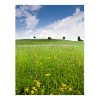 green summer meadows in bavaria, ostallgäu with Postcard