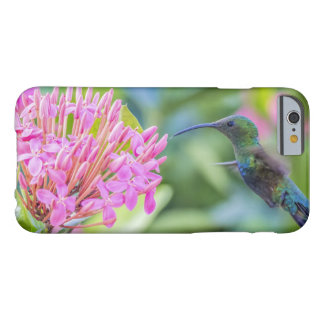 Green Throated Carib Hummingbird Barely There iPhone 6 Case