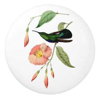 Green Throated Carib Hummingbird Ceramic Knob