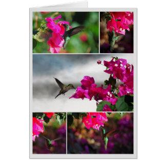 Green-throated Carib Hummingbird Collage Cards