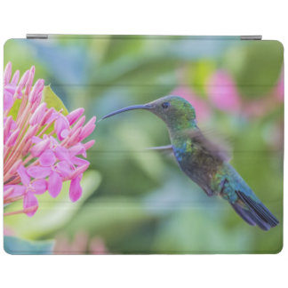 Green Throated Carib Hummingbird iPad Cover