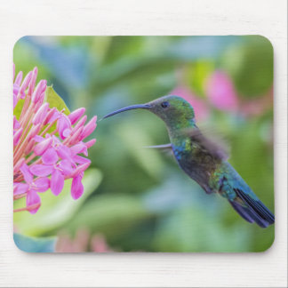 Green Throated Carib Hummingbird Mousepad