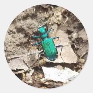 Green Tiger Beetle Round Sticker