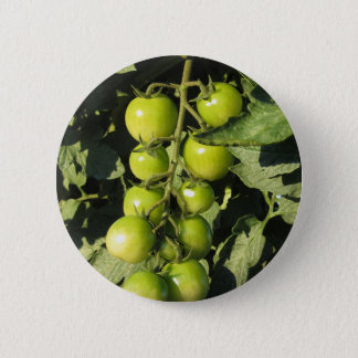 Green tomatoes hanging on the plant in the garden 6 cm round badge