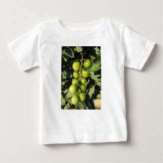 Green tomatoes hanging on the plant in the garden baby T-Shirt