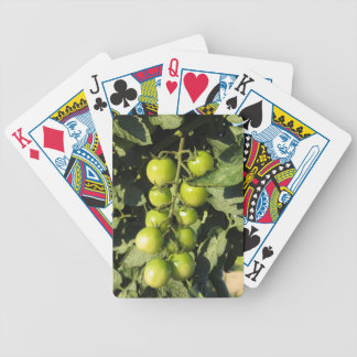 Green tomatoes hanging on the plant in the garden bicycle playing cards