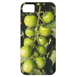 Green tomatoes hanging on the plant in the garden iPhone 5 case
