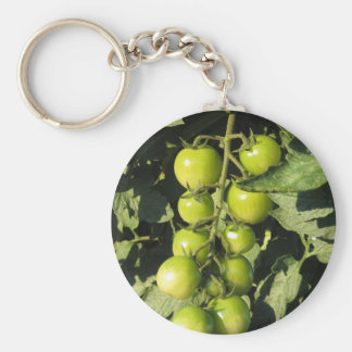 Green tomatoes hanging on the plant in the garden key ring