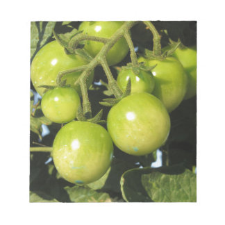 Green tomatoes hanging on the plant in the garden notepad