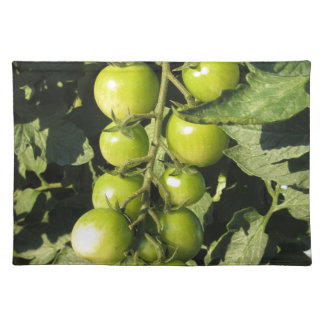 Green tomatoes hanging on the plant in the garden placemat