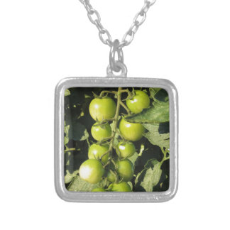 Green tomatoes hanging on the plant in the garden silver plated necklace