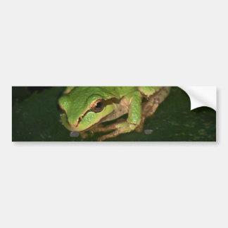Green Tree Frog Bumper Sticker Car Bumper Sticker