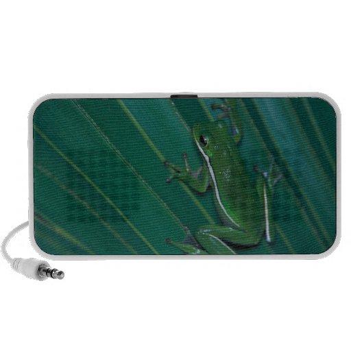 Green Tree Frog Doodle Speaker System
