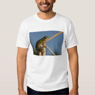 Green Tree Frog Hyla cinerea) Little St Shirts