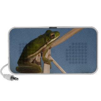 Green Tree Frog Hyla cinerea) Little St Speaker System