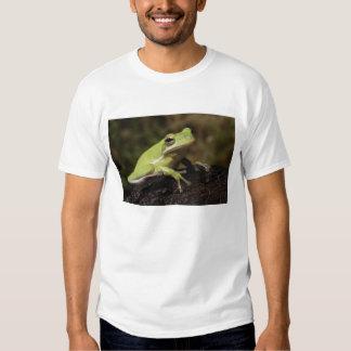 Green Tree Frog, Hyla cineria, Shirt