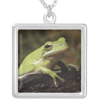 Green Tree Frog, Hyla cineria, Square Pendant Necklace