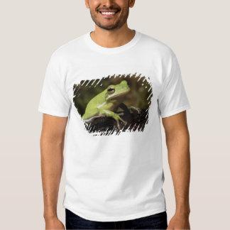 Green Tree Frog, Hyla cineria, Tee Shirt