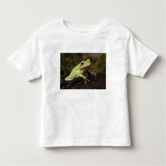 Green Tree Frog, Hyla cineria, Tee Shirts