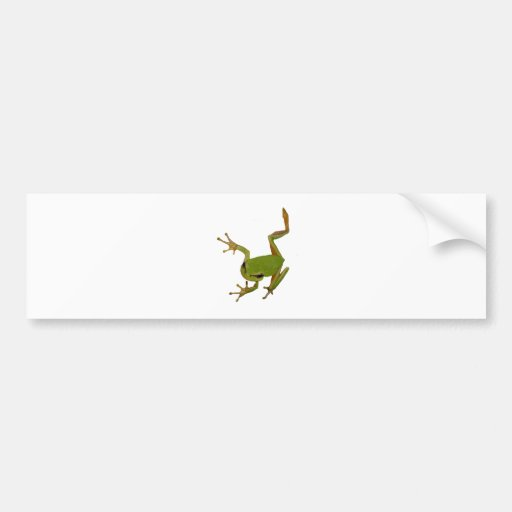 Green Tree Frog Isolated Bumper Sticker