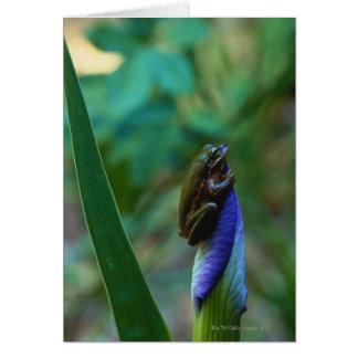 Green Tree Frog on Iris Card