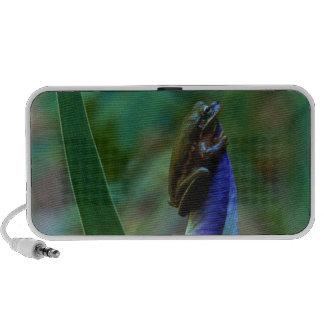 Green Tree Frog on Iris Travelling Speakers