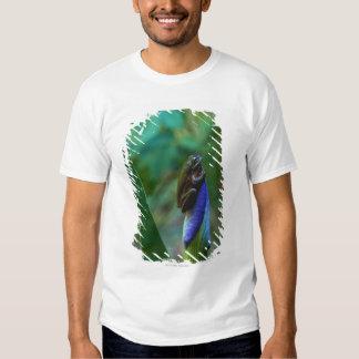 Green Tree Frog on Iris T-shirt