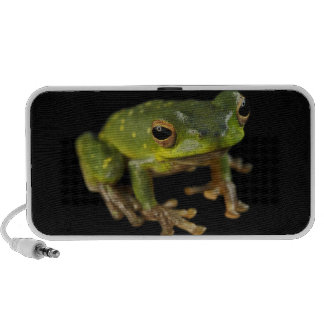 Green Tree Frog Travel Speakers