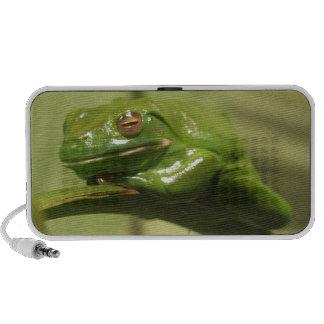 Green Tree Frog Laptop Speaker