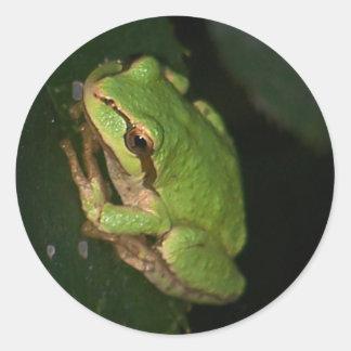 Green Tree Frog Sticker