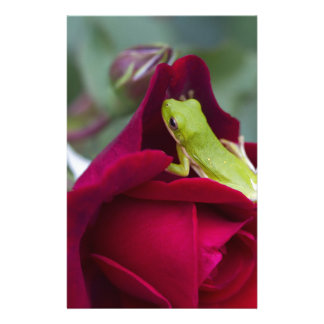 Green Tree Frogs and Red Roses Stationery