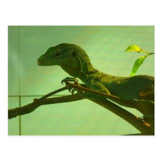 green tree monitor postcard