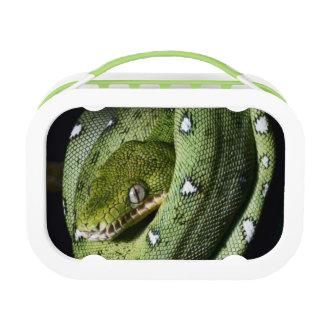 Green tree snake emerald boa in Bolivia Lunch Box