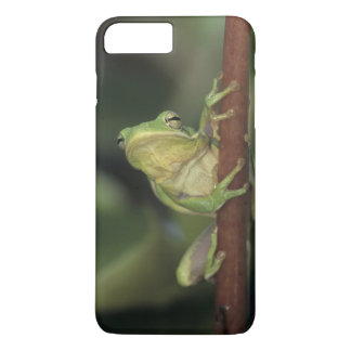 Green Treefrog, Hyla cinerea, adult on yellow iPhone 7 Plus Case