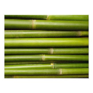 Green Tropical Bamboo Plant Botanical Photo Art
