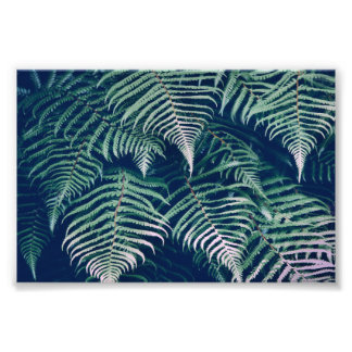 Green Tropical Fern Leaves Natural Pattern Photo Print