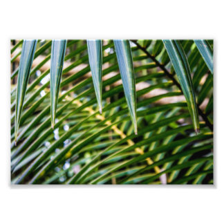 Green Tropical Leaves Photographic Print