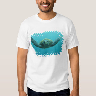Green Turtle (Chelonia mydas agassisi), Central Tshirts