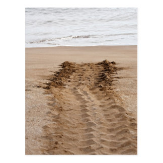 Green Turtle Chelonia mydas agassisi) Tracks Postcard