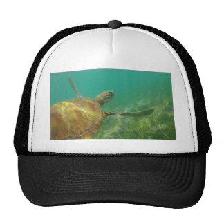 Green-turtle-Great-Barrier-Reef.JPG Cap