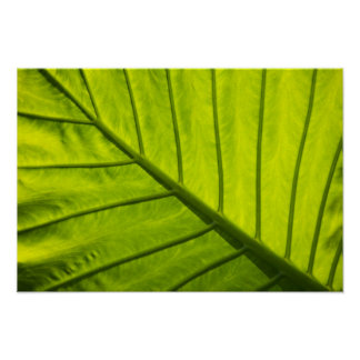 Green veined leaves of tropical foliage in 2 poster
