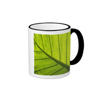 Green veined leaves of tropical foliage in 2 ringer mug
