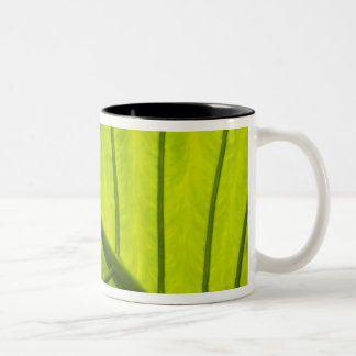 Green veined leaves of tropical foliage in 2 Two-Tone mug
